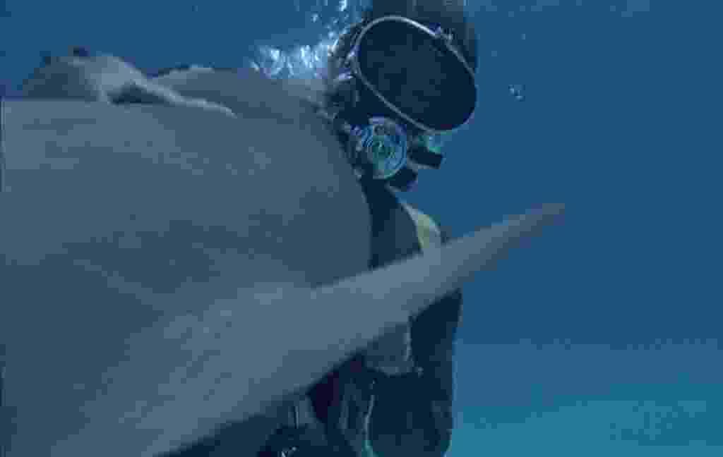 """Dublê Jose Marco foi morto por um  em cena de """"Tubarão"""" (1969) - Reprodução"""