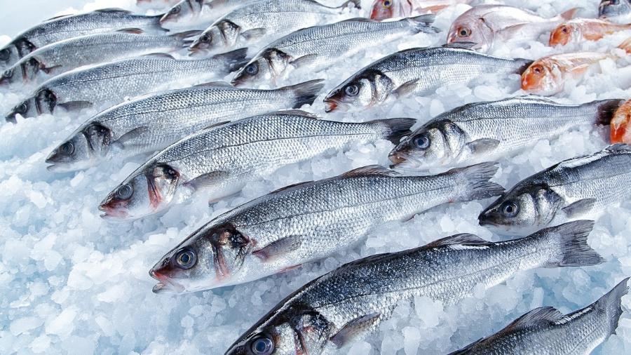 É preciso estar atento às características dos peixes frescos no supermercado ou feira - iStock