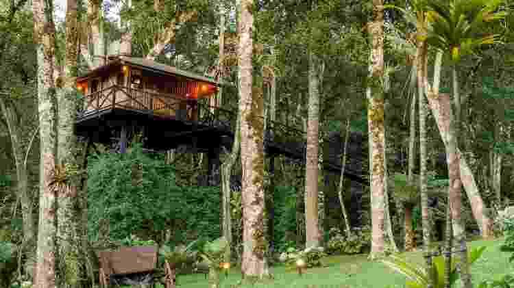 casa na árvore - Divulgação/Airbnb - Divulgação/Airbnb