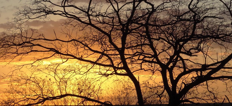 Pôr do sol na Floresta Nacional do Açu (RN).  - Gislene Ganade