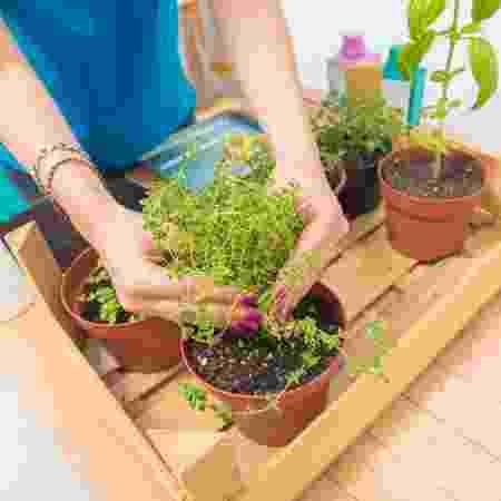 Hortinha em casa 2 - iStock - iStock