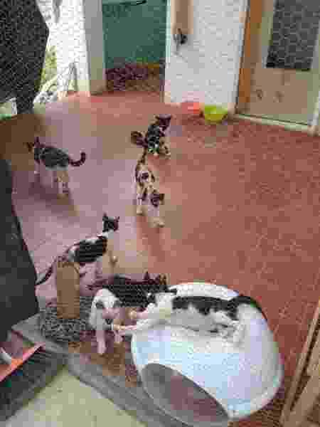 Gatos no lar criado pelo projeto SOS Pet Pinheiro em Maceió - Divulgação - Divulgação