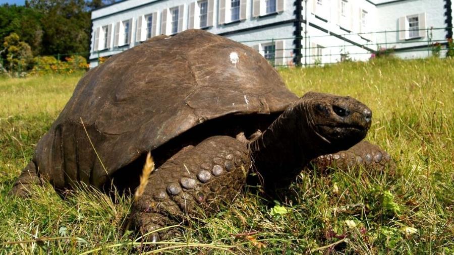 """Jonathan é o animal terrestre mais velho do mundo, de acordo com o """"Guinness World Records"""" - Reprodução/Guinness World Records"""
