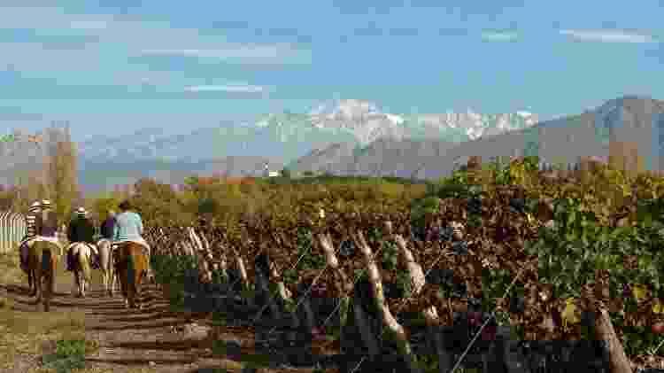 A adega Nieto Senetiner oferece a possibilidade de fazer visita guiada, degustação de vinhos, almoço harmonizado e cavalgadas pelos vinhedos - Divulgação
