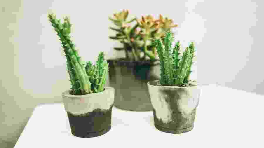 Tendência na decoração, os vasos de cimento podem dar um up na sua casa e até ser fonte de renda - Casl à Obra/UOL