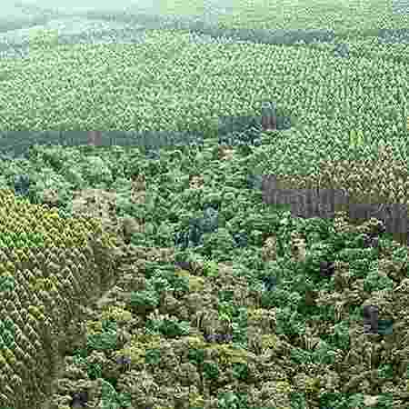 Plantação de eucaliptos no sul da Bahia, segundo estado que mais perdeu Mata Atlântica entre 2018 e 2019 - Diego Pagdurschi/Folhapress