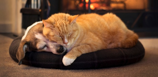 Cães e gatos são mais que animais de estimação, são parte da família: cuide bem! - Getty Images
