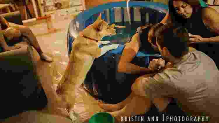 Corgi acompanha parto - Kristin Ann Photo - Kristin Ann Photo