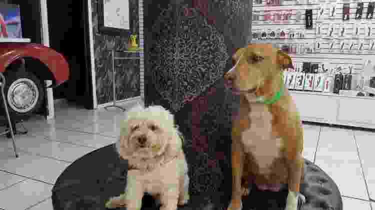 Vintinho (à esq.) e Zaira no sex shop - Arquivo Pessoal - Arquivo Pessoal