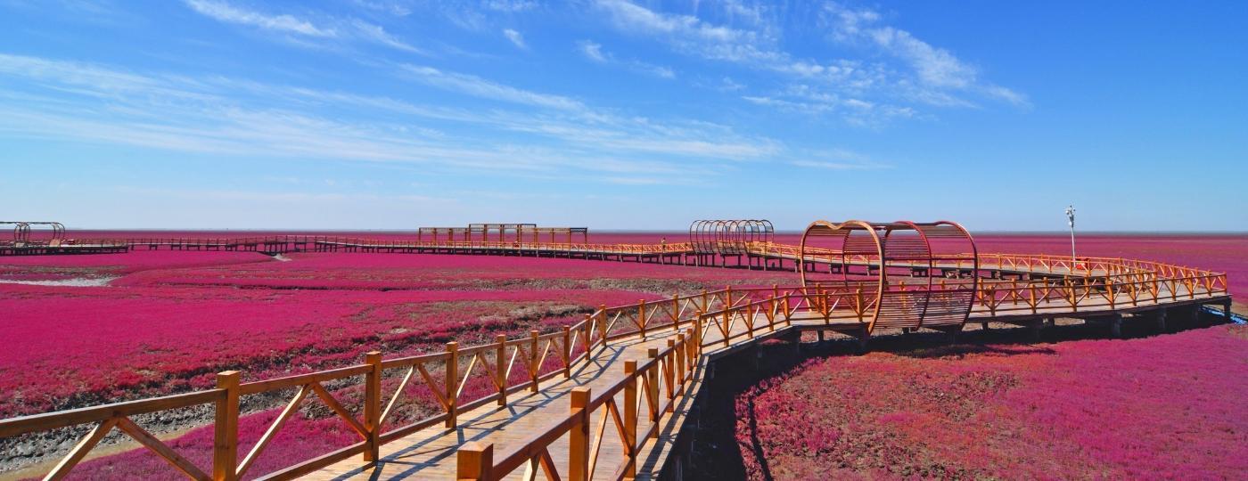 As plantas que dão origem ao fenômeno alcançam sua coloração mais intensa entre setembro e outubro - Getty Images/iStockphoto