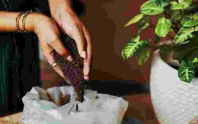 Fique de olho nos nutrientes que sua planta precisa - Getty Images - Getty Images
