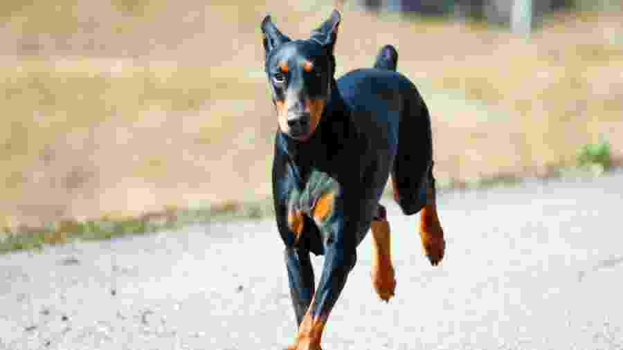 Copper sofre de uma síndrome que afeta sua mobilidade - iStock