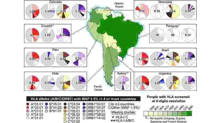 Genes HLA da América do Sul e frequências alélicas ponderadas (WAFs) - Reprodução - Reprodução