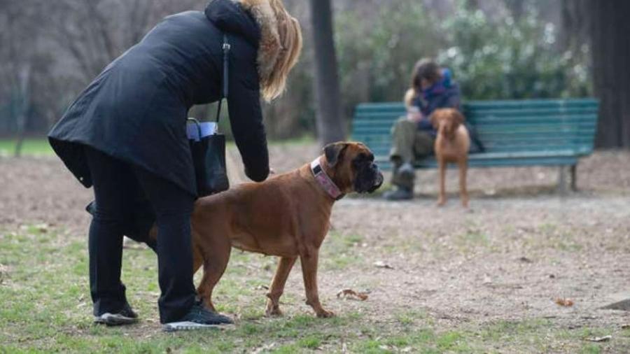 Cachorros serão treinados para auxiliar na luta contra o novo coronavírus - ANSA