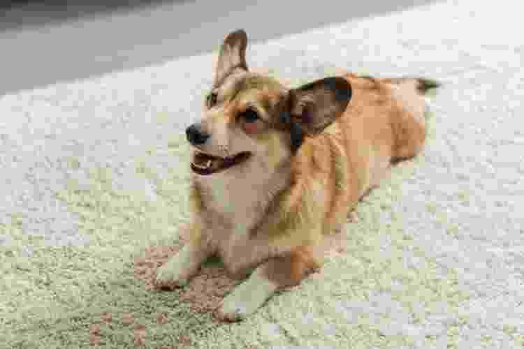 Tapetes de polipropileno são os mais aconselhados para quem tem um pet em casa - Getty Images - Getty Images