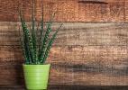 Veja 13 plantas para dar sorte em casa - Reprodução/ Revista Ana Maria