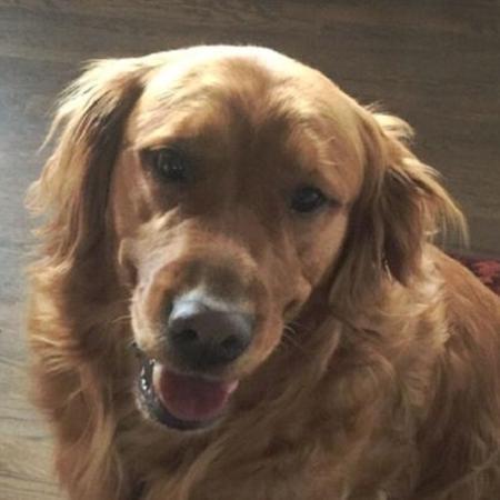 Sundance, cachorro que leva comida para vizinha idosa - Reprodução/CNN