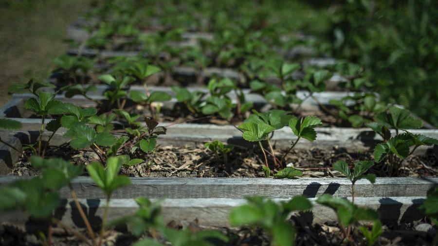 Pequenos produtores rurais terão 33 bilhões para financiamento pelo Programa Nacional de Fortalecimento da Agricultura Familiar  - Jardiel Carvalho/UOL