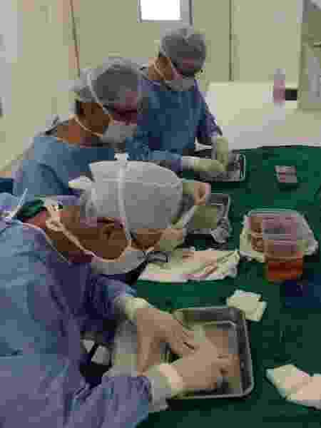 Pesquisadores da Universidade Federal do Ceará durante trabalho com pele de tilápia em laboratório - Divulgação - Divulgação