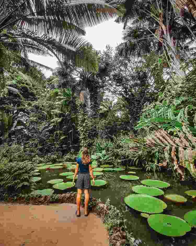 Vitórias-régias, um dos símbolos da região amazônica - Getty Images/EyeEm - Getty Images/EyeEm