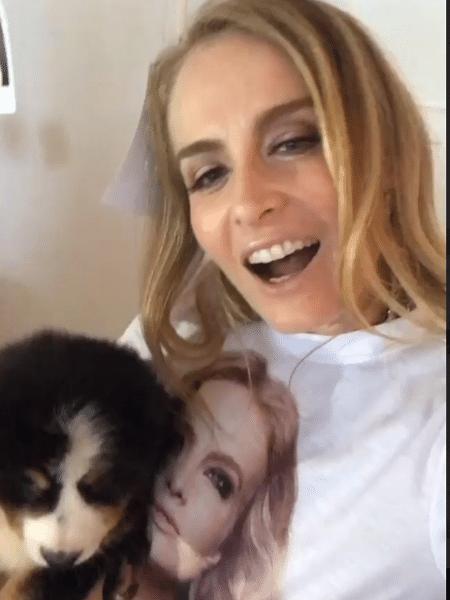 Angélica ganha cachorro de fãs - Reprodução/Instagram/angelisky