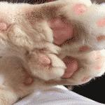 O gato Bronson - Reprodução/Instagram/iambronsoncat