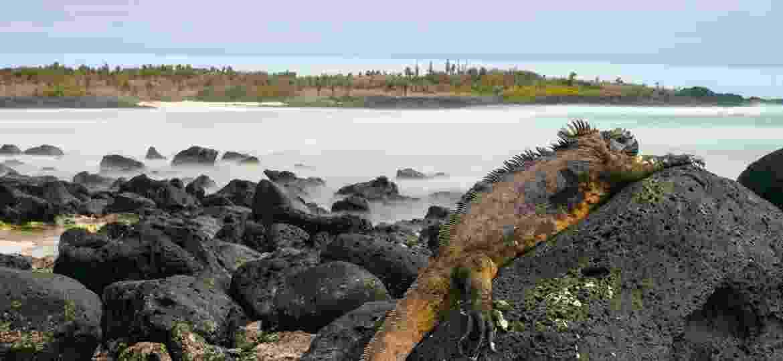 Ilha de Galápagos - Getty Images/iStockphoto