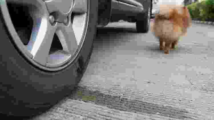 xixi cachorro na roda - iStock - iStock