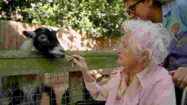Além de lojas, a 'rua sensorial' conta com a presença de animais, incluindo cabras, papagaios e porquinhos-da-índia - BBC