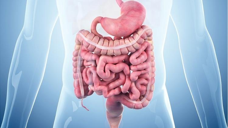 Intestino - Getty Images - Getty Images