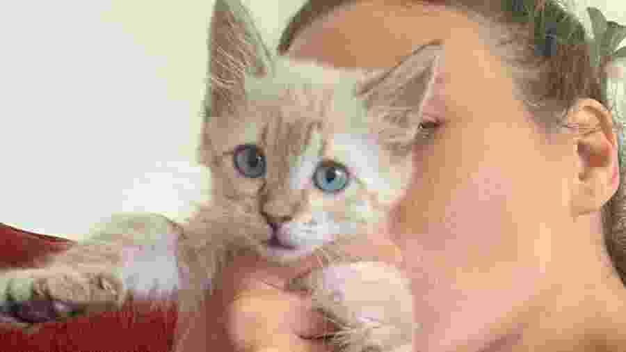 Ana Cañas exibe Portelinha, gata que adotou como animal de estimação - Reprodução/Instagram