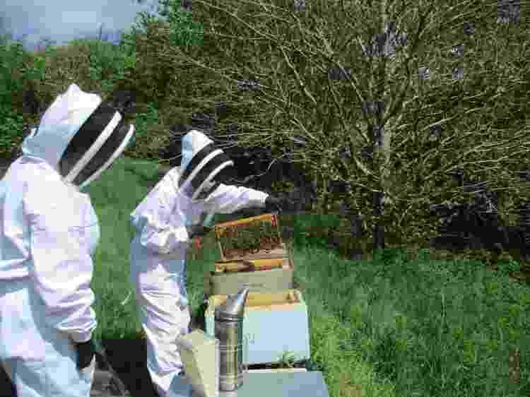 Blaeneinion, o eco-resort anti-vacina no país de Gales (7) - Reprodução - Reprodução
