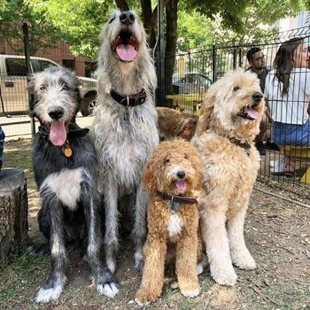 Parque americano tem atividades para cães - Reprodução/Instagram