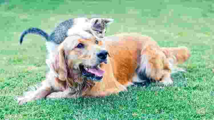 cachorro, gato, animais domésticos, pet, bichos - iStock - iStock