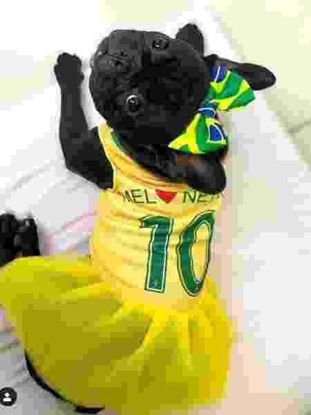 Pets vestem a camisa da seleção brasileira para a final da Copa América - Reprodução/Instagram