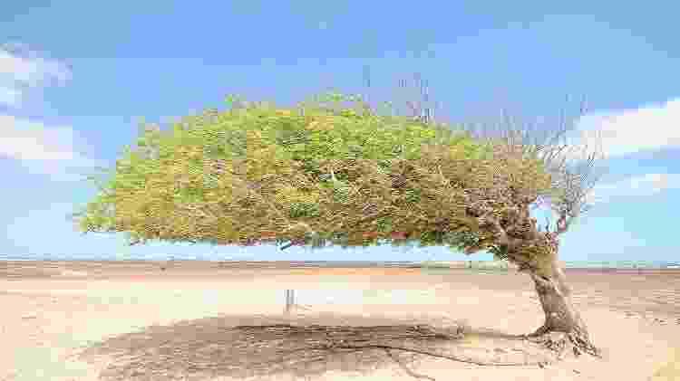 Árvore Penteada - Paulo Barros/Divulgação