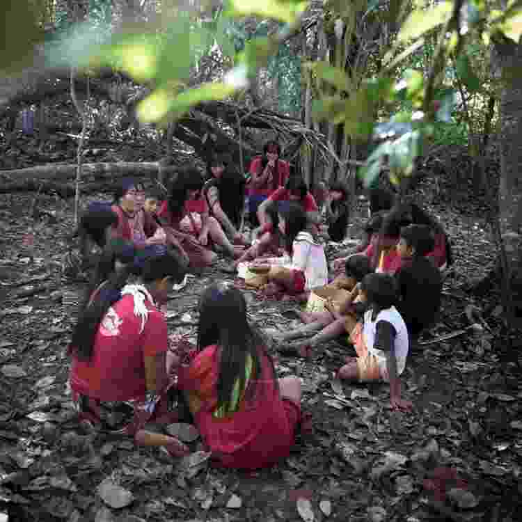 Mulheres Yarang reunidas na floresta para a coleta de sementes - Carol Quintanilha/Instituto Socioambiental - Carol Quintanilha/Instituto Socioambiental