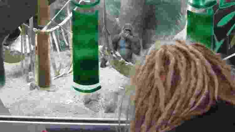 'Os gorilas me deram meu lado humano', diz Prince-Hughes - Jo Fidgen - Jo Fidgen