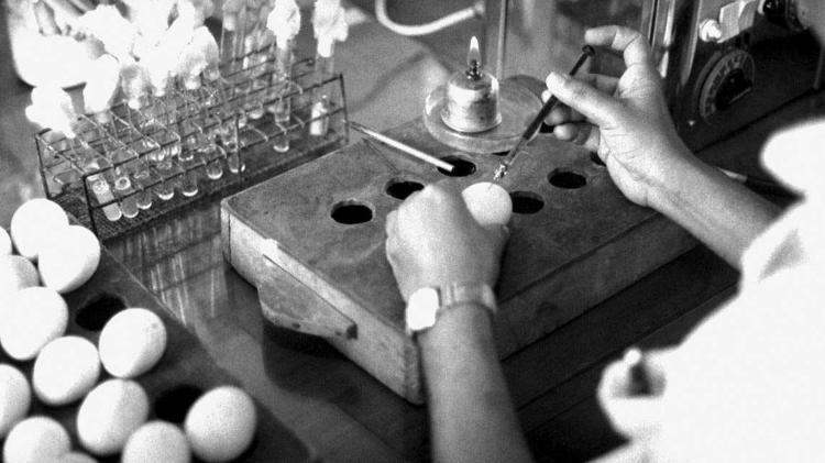 Técnico injeta partículas virais em ovos para produção da vacina, em Bangladesh, 1962 - Stan Foster/CDC - Stan Foster/CDC