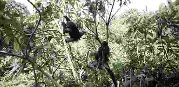 Os tours em Ruanda para ver gorilas de perto custam centenas de dólares - Martina Bacigalupo/The New York Times