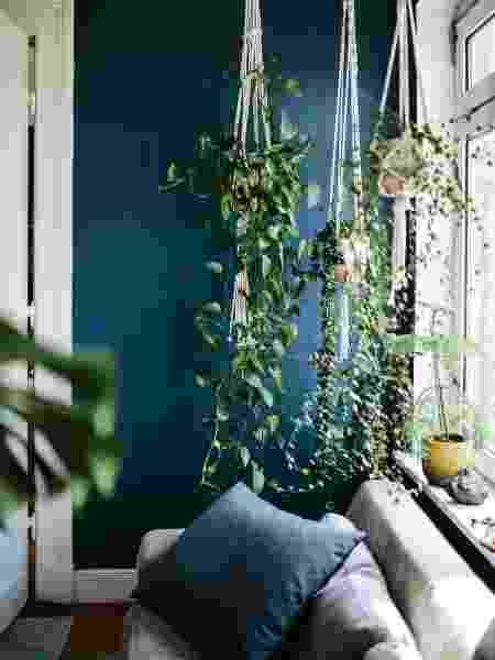 Jiboia pendurada na casa com o uso de um hanger - Reprodução/Pinterest - Reprodução/Pinterest