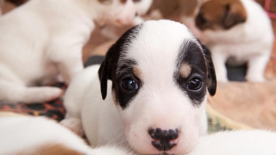Foto meramente ilustrativa: não sabemos a idade e a raça de Nick, Fred,Baby, Laika, Thor e Sharon, os cãezinhos envolvidos no processo - Ska_Zka/Getty Images/iStockphoto