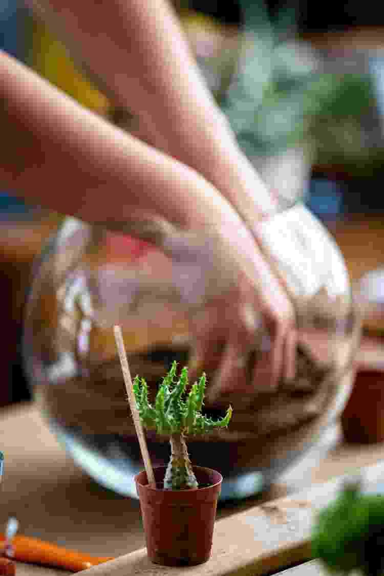 Manutenção dos terrários depende do modelo escolhido para cultivar as plantas - Getty Images - Getty Images