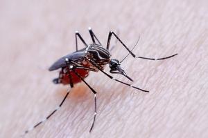 PF vê desvios em contratação para combate ao mosquito da dengue em Minas (Foto: iStock)