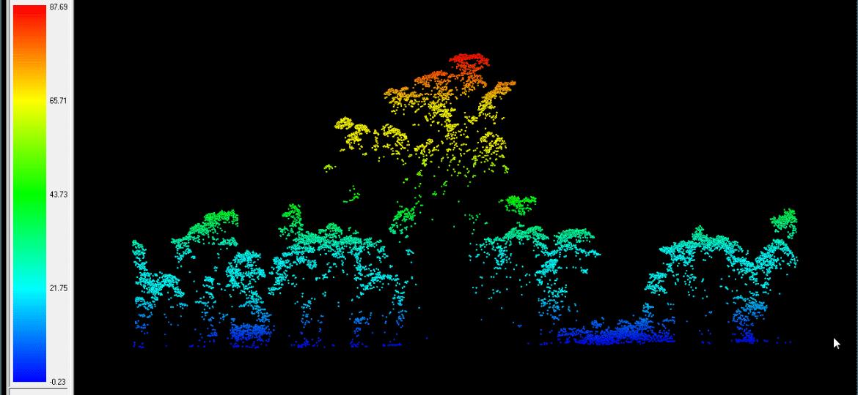 Árvore mais alta da Amazônia, ainda somente vista por radar; em busca de luz, Angelim fica acima das outras e atingiu 88,5 metros de altura - Reproduçã