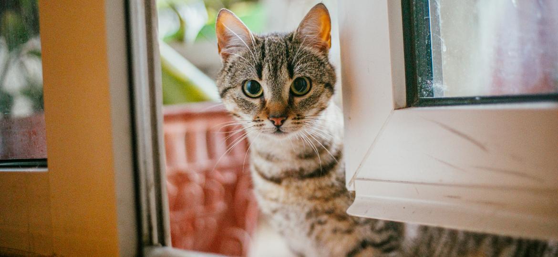 Cio das gatas pede atenção maior para doenças, barulho e fugas - Getty Images