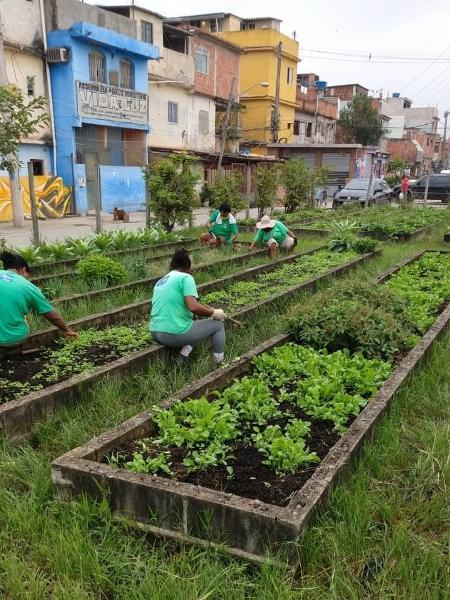 Maior horta urbana da américa latina teme por falta de recursos. - Ezequiel Dias