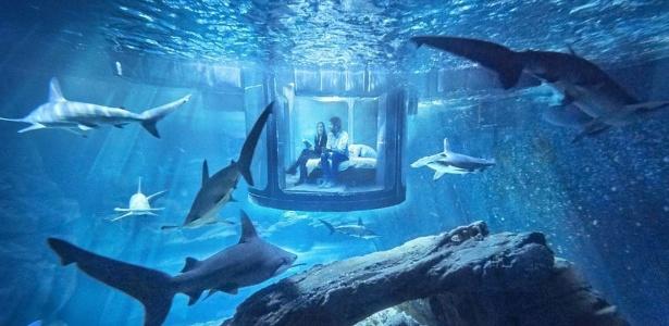 A acomodação estará submersa em um tanque com 3 milhões de litros de água - Divulgação/Airbnb
