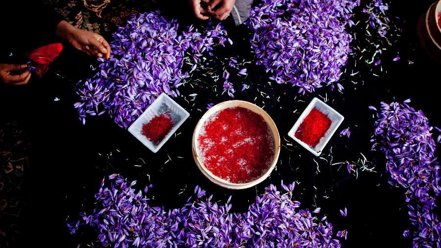 A Pashton Zarghon Saffron Women produz e exporta o açafrão colhido por mais de mil mulheres - Getty Images