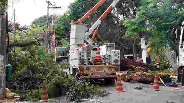 Remoção de Tipuana caída em decorrência de tempestade, na Rua Pascoal Vita, Alto de Pinheiros - Cyntia Malaguti - Cyntia Malaguti